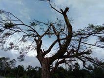 Ligação do Aforestation para enterrar a vida fotos de stock
