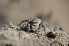 Ligação em ponte da aranha Fotos de Stock Royalty Free