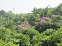 Liga av träd Arkivbild