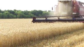 A liga colhe a agricultura do trigo Agricultura que colhe a ceifeira de liga vídeo de movimento do tiro do steadicam Fotografia de Stock