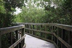 Liga??o da ponte de madeira ? selva Fugas de madeira boardwalk Uma doca sobre a ?gua em rochas indianas encalha a conserva de nat fotografia de stock