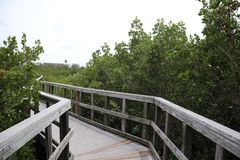 Liga??o da ponte de madeira ? selva Fugas de madeira boardwalk Uma doca sobre a ?gua em rochas indianas encalha a conserva de nat imagens de stock