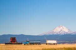 Liga pronta para colher em Oregon central Fotografia de Stock Royalty Free