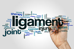 Ligament word cloud. Concept on grey background stock photos