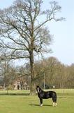 Lige da vila, cavalo em um prado, Países Baixos imagens de stock