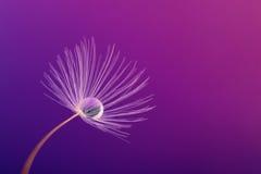Ligereza púrpura Imagenes de archivo