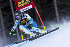 LIGETY Ted Royalty Free Stock Photo