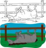 Ligga för häst Arkivfoton