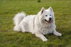 ligga för hundgräs Royaltyfri Foto