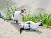 Ligga för katter Royaltyfri Fotografi