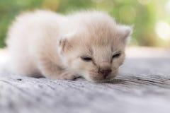 ligga för kattunge som är litet Fotografering för Bildbyråer