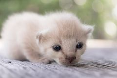 ligga för kattunge som är litet Royaltyfri Bild