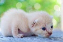 ligga för kattunge som är litet Royaltyfri Fotografi