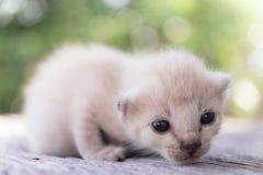 ligga för kattunge som är litet Royaltyfria Bilder