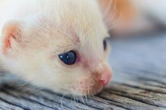 ligga för kattunge som är litet Arkivbild
