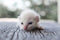ligga för kattunge som är litet Royaltyfri Foto