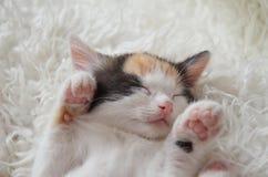 Ligga sova kattungen Fotografering för Bildbyråer
