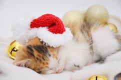Ligga sova kattungen Arkivbild
