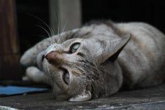 Liggande älsklings- katt för brunt Royaltyfri Bild