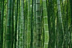 Liggande av bambuskogen i det Sichuan bambuhavet Royaltyfri Bild
