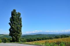 Liggande av Biei, Hokkaido. arkivfoton