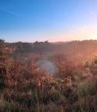 Liggande av dyner och trees i misten royaltyfria foton