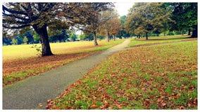 Liggande av hösten Arkivbilder