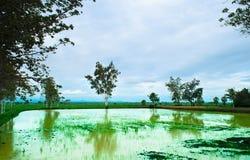Liggande av ricefältet Fotografering för Bildbyråer