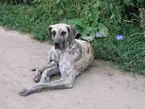 Liggande gammal hund royaltyfri foto