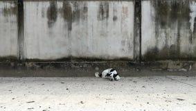 Liggande gata för svartvit thailändsk hund royaltyfri foto