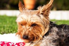 Liggande hund på en solig dag arkivbild