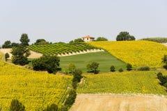 Liggande i Umbria nära Todi Arkivbild