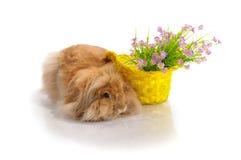 Liggande kanin och korg med blommor Arkivfoton