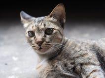 Liggande katt Royaltyfri Foto