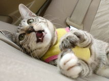 Liggande katt Arkivfoto