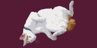 Liggande katt royaltyfri fotografi
