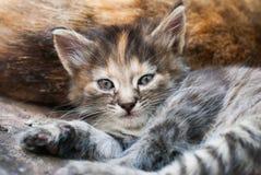 Liggande kattunge - gulliga randiga Cat Enjoying Life Outdoors royaltyfri foto