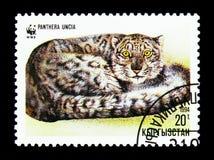 Liggande krullad-upp snöleopard (Pantheraunciaen), WWF serie, circa Arkivfoto
