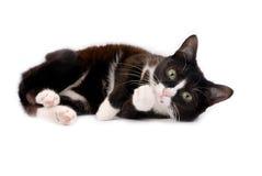 Liggande liten kattunge Fotografering för Bildbyråer