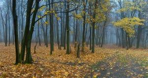 Liggande med dimma i skog royaltyfria foton