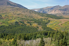 Liggande med skogen och berg royaltyfri fotografi
