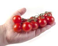 liggande mogna tomater för borstehandhuman Arkivfoto