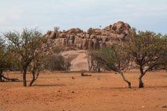 liggande namibia Royaltyfri Fotografi