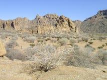 liggande namibia Arkivfoton