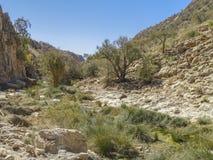 liggande namibia Fotografering för Bildbyråer