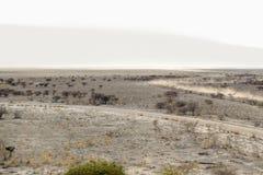 liggande namibia Arkivbilder