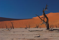 liggande namibian Royaltyfri Fotografi