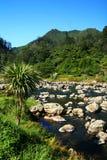 liggande New Zealand Royaltyfria Foton