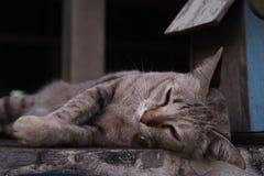 Liggande sömnig brunthusdjurkatt Royaltyfria Foton