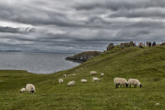 liggande scotland Royaltyfria Foton